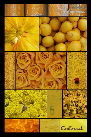 T12 - Collage 089 2 2