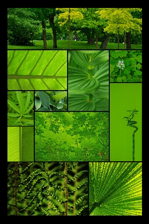 T12 - Collage 044 2 2
